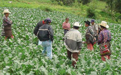 Proyecto en Perú 2002